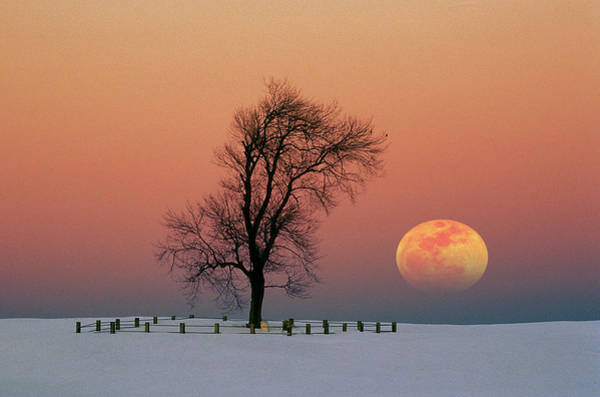 Photograph - Full Moon Rising Near Graveyard by Larry Landolfi