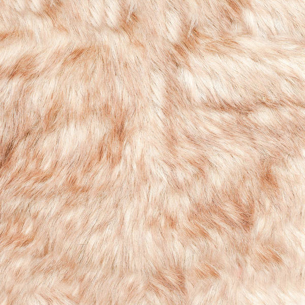 Brown Wall Art - Photograph - Fur Background by Tom Gowanlock