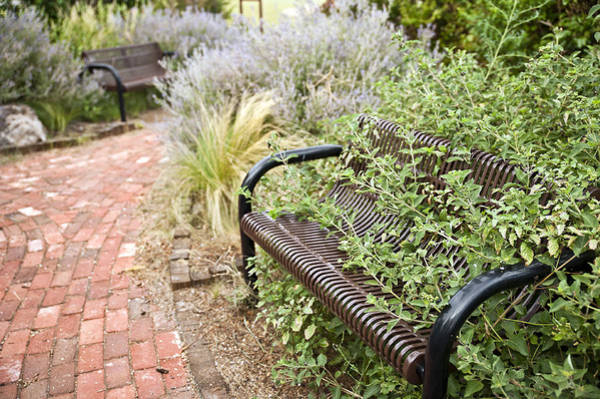 Photograph - Garden Bench by Melany Sarafis