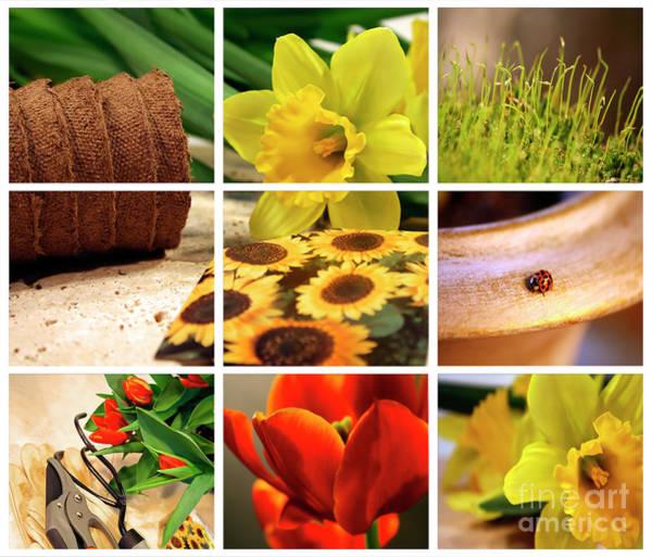 Wall Art - Photograph - Garden Collage by Sandra Cunningham