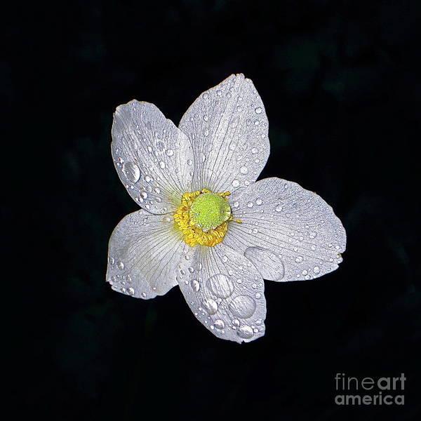 Photograph - Garden Jewel And Rain by Byron Varvarigos
