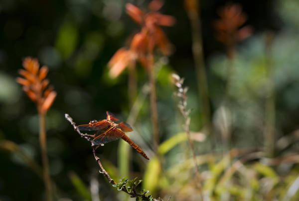 Photograph - Garden Orange  by Priya Ghose