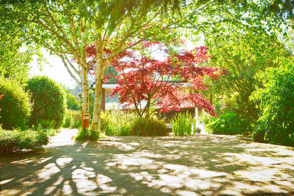Late Afternoon Wall Art - Photograph - Garden Shade by Tom Gowanlock