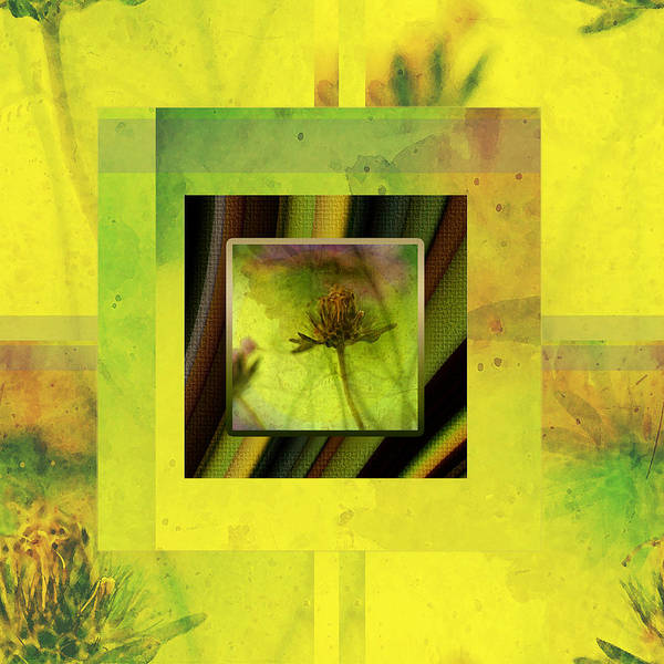 Chartreuse Photograph - Garden Story by Bonnie Bruno