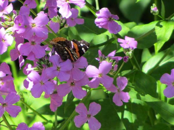 Photograph - Garden Visit 1 by Anita Burgermeister