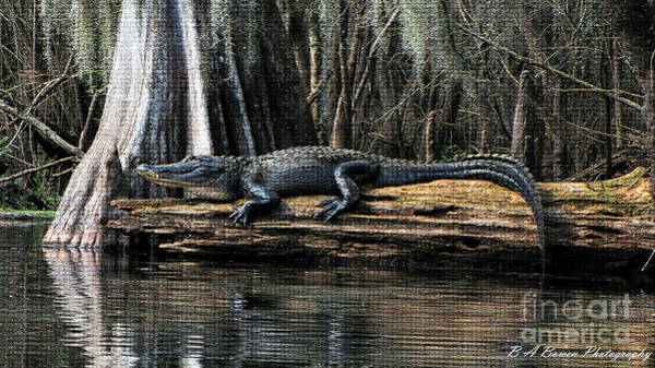 Photograph - Gator Sunning On A Cypress Log Mosaic by Barbara Bowen
