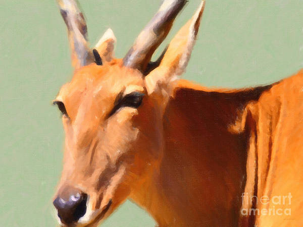 Photograph - Gazelle . 7d2018 by Wingsdomain Art and Photography