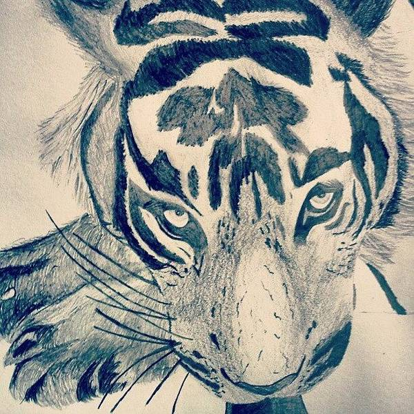Pencil Wall Art - Photograph - #gcse #art #drawing #tiger #sketch by Hayden Walsh