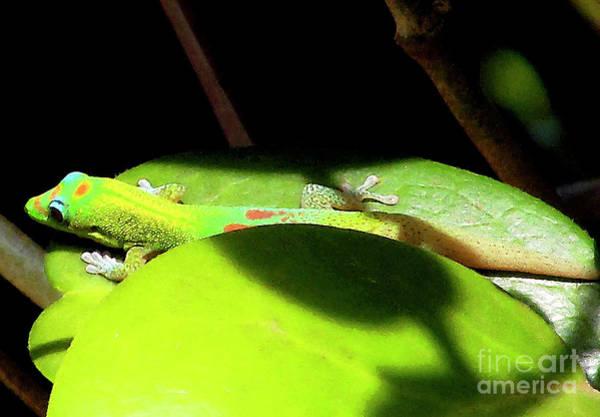 Photograph - Gecko - Green On Green by Bette Phelan