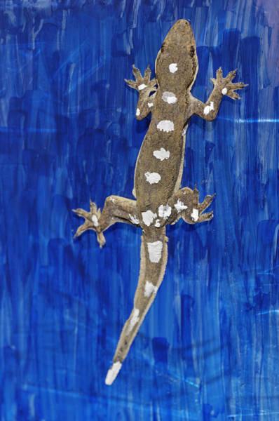 Biomimetics Wall Art - Photograph - Gecko Locomotion Study by Volker Steger