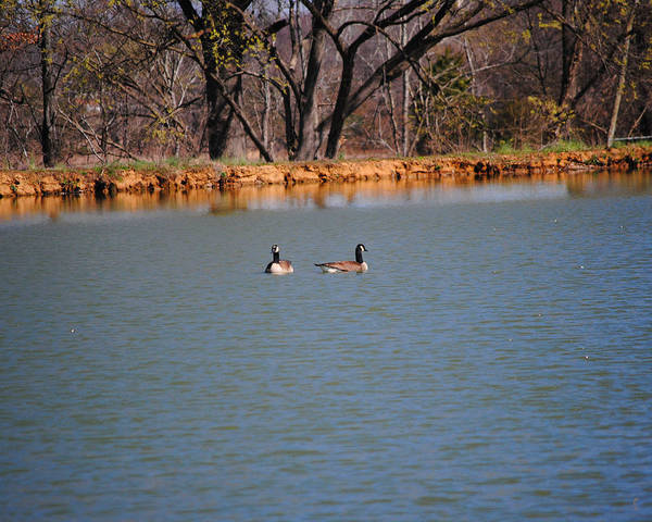 Photograph - Geese On The Water by Jai Johnson