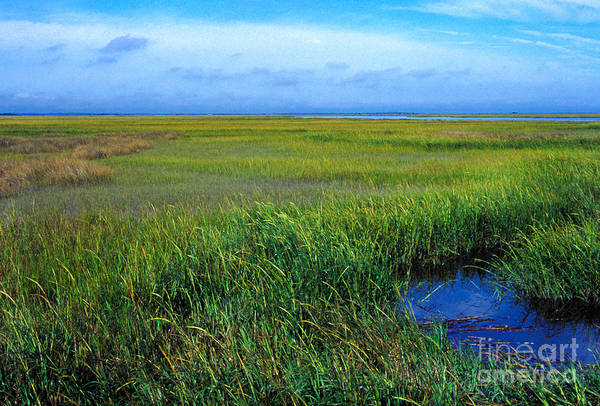 Photograph - Georgia Coastal Prairie by Thomas R Fletcher