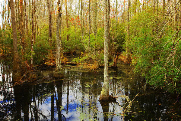 Photograph - Georgia Swamp 2 by Sheila Kay McIntyre