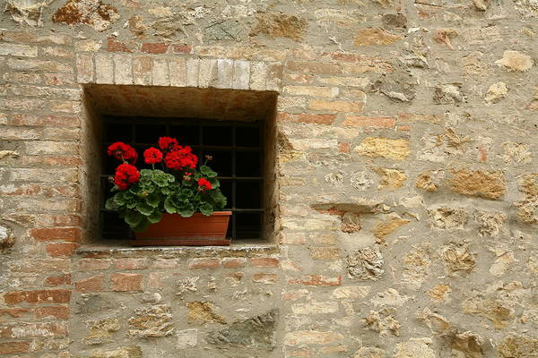 Photograph - Geraniums In The Window by Donna Corless