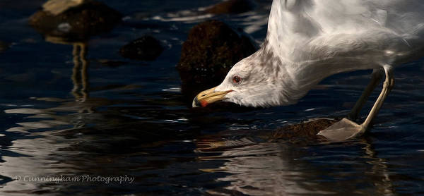 Photograph - Getting A Little Drink by Dorothy Cunningham