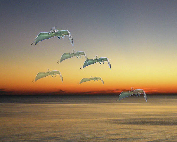 Photograph - Ghost Flight by Lizi Beard-Ward