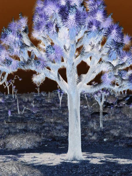 Ghostly Joshua Tree Art Print by Claire Plowman