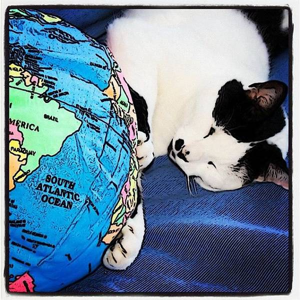 Comics Wall Art - Photograph - Giant Cat Attacks The World #fun #cats by Shelley Walsh