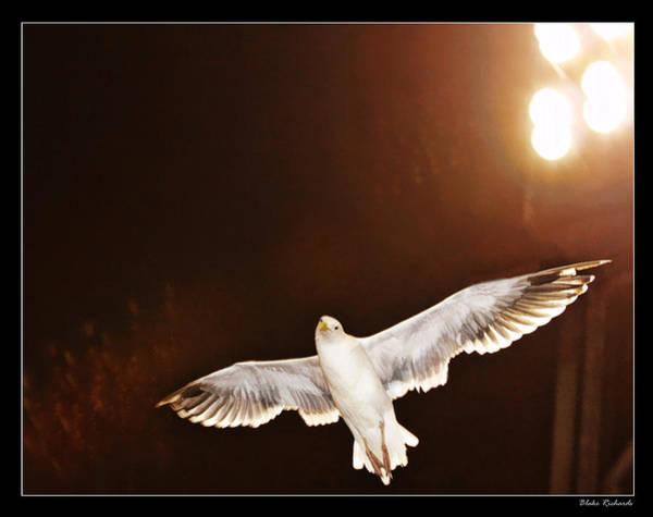 Photograph - Giant Seagul by Blake Richards