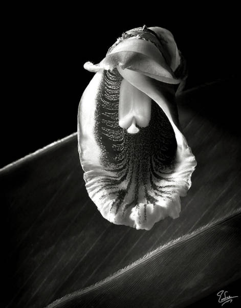 Photograph - Ginger Flower In Black And White by Endre Balogh