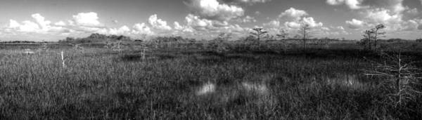 Wall Art - Photograph - Glades by William Wetmore