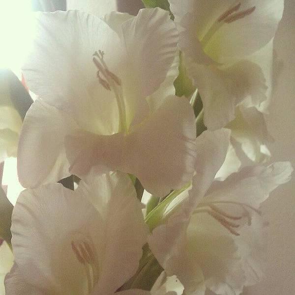 Petals Wall Art - Photograph - Gladioli by Kimberley Dennison