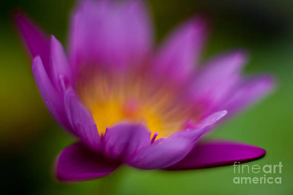 Water Lilies Wall Art - Photograph - Glorious Lily by Mike Reid