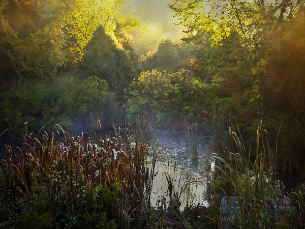 Photograph - Glorious Morning by Robin Webster