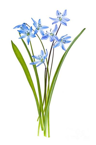 Photograph - Blue Spring Flowers by Elena Elisseeva