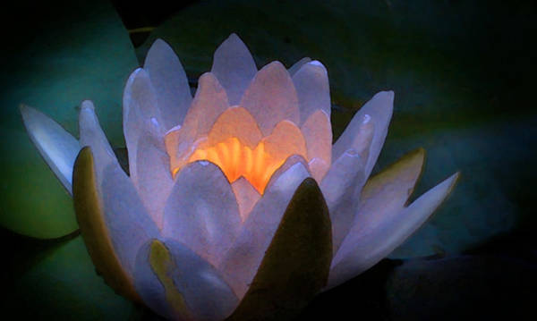 Lilly Pad Digital Art - Glow In The Lily by Lauren Goia
