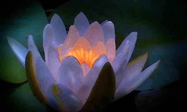 Glow In The Lily Art Print by Lauren Goia