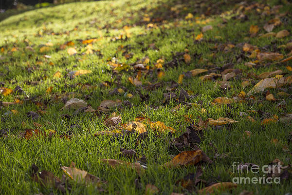 Photograph - Glowing Autumn Day by Clare Bambers