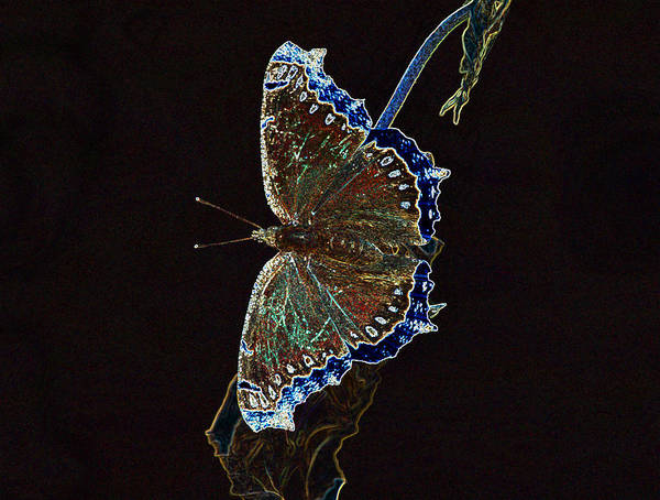 Photograph - Glowing Butterfly by Sandy Keeton