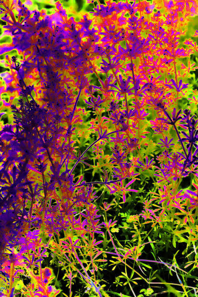 Solarized Photograph - Glowing Weeds by Linda Phelps