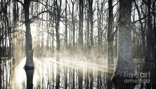 Photograph - Glowing Woods by RicharD Murphy