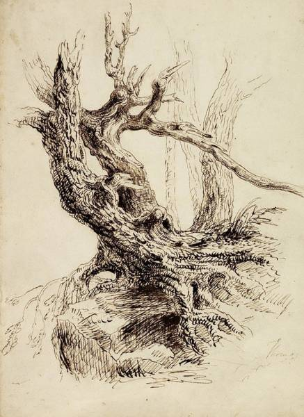 Gnarl Wall Art - Drawing - Gnarled Tree Trunk by Thomas Cole