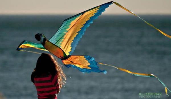 Photograph - Go Fly A Kite by Dorothy Cunningham