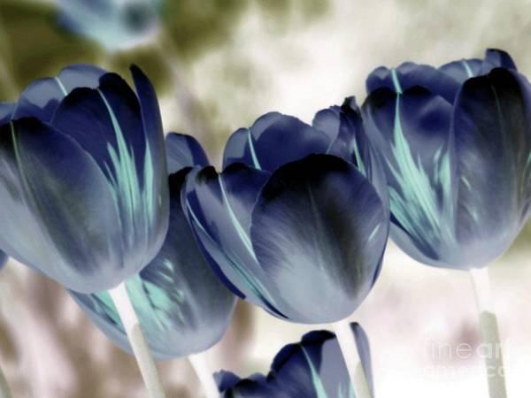 Wall Art - Photograph - Going Blue by Margaret Hamilton