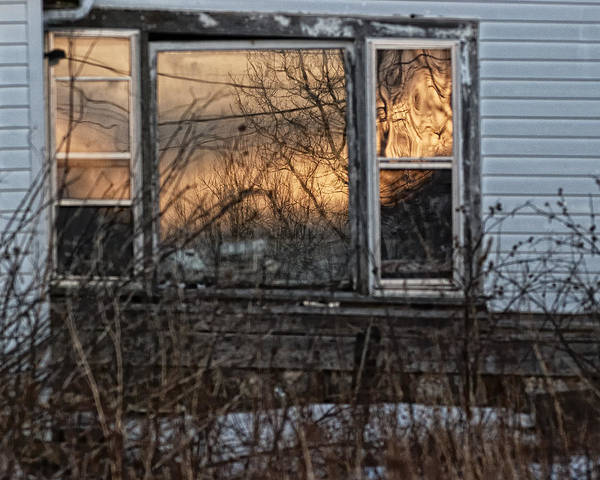 Deterioration Photograph - Going Native by Susan Capuano