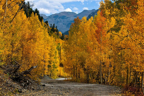 Grand Mesa National Forest Photograph - Gold Rush by Jennifer Grover