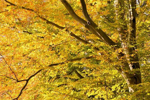 Photograph - Golden Autumn by JD Grimes