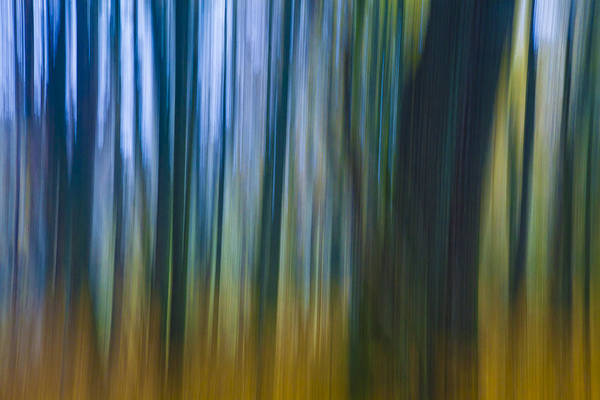 Photograph - Golden Blue by Andy Bitterer