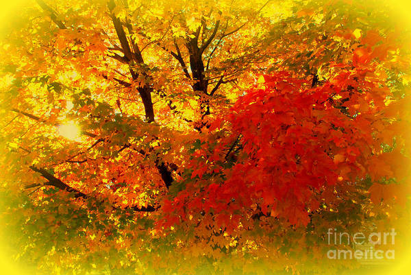 Photograph - Golden Colors Of Fall by Susanne Van Hulst