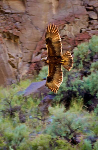 Photograph - Golden Flight  by Britt Runyon