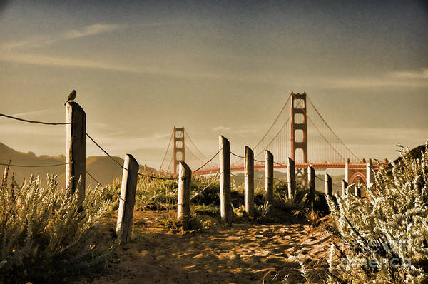 Golden Gate Bridge - 3 Art Print