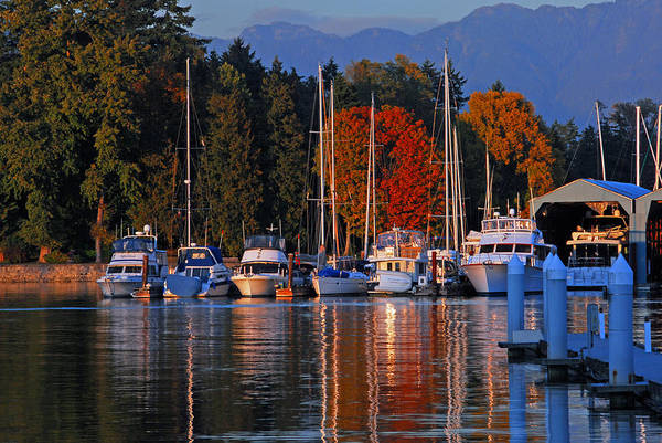 Photograph - Golden Hour At The Harbor by Lynn Bauer