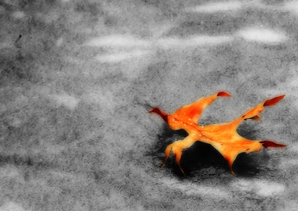 Photograph - Golden Leaf On Frozen Pond by Shelley Neff