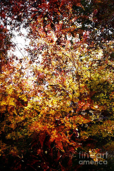 Wall Art - Digital Art - Golden Leaves by Affini Woodley