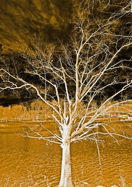 Photograph - Golden Magical Tree by Sheila Kay McIntyre