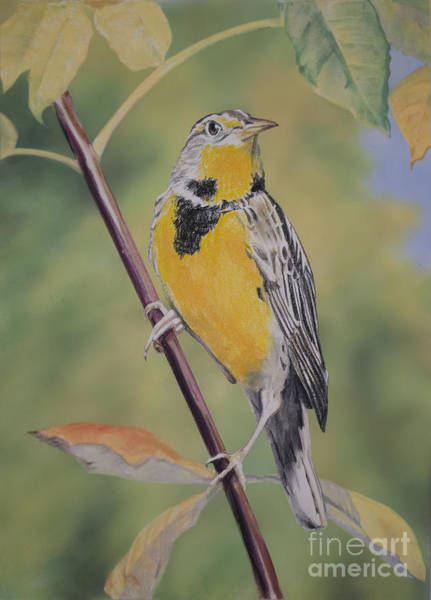 Meadowlark Painting - Golden Meadowlark by Kathryn Yoder